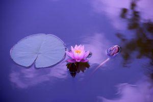 mindfulness meditationer til stress ramte